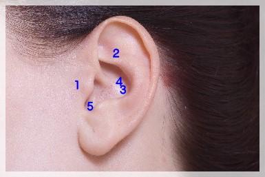 ダイエットに効く耳ツボの位置